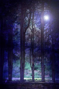 Nature Photography dark blue woodlands by moonlightphotography, $28.00