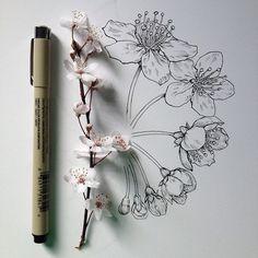Photo fleur de cerisiers