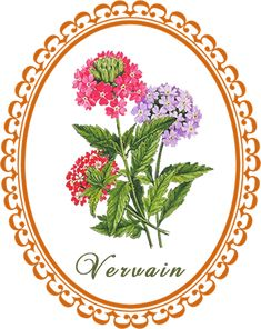 The medicinal actions, medicinal uses, cautions and herbal combinations of vervain in herbal healing and how to make a vervain infusion and tincture. Plant Drawing, Evil Spirits, The Magicians, Law Of Attraction, Planting Flowers, Herbalism, Healing, Herbs, Make It Yourself