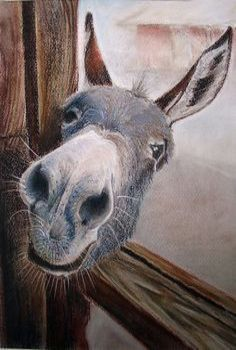 If you wonder what a donkey can eat, you can find all important feeding facts here. Take good care of your donkey with best information. Farm Animals, Animals And Pets, Funny Animals, Cute Animals, Wild Animals, Cute Donkey, Mini Donkey, Tier Fotos, Horse Art