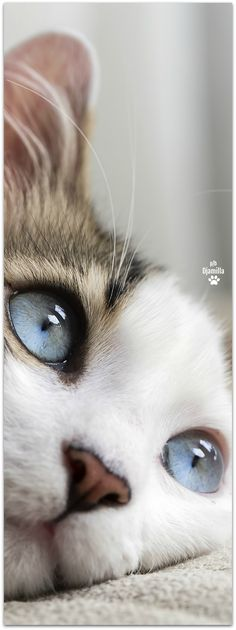 Tu as de beaux yeux, tu sais...