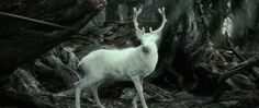 Just watched The Hobbit 2 extended version and saw this guy. What does the White Stag means? (This is not from Harry Potters film)  The Hobbit Fantasy Movie Lord Of The Rings Movies Meme
