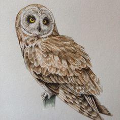 "Daily drawing/Done."" Short-eared owl"" OCT.24.2015 Acrylic and Copicmultiliner/warm gray and black 0.03 on paper. #art#artsy#artgram#instaart#rtistic_feature#pen#penart#pendrawing#penfreaks#monoart #_tebo_ #artfido#worldofpencils #artist_sharing#draw #drawing #illust #illustration#owl#bird#animal#arts_help#sketch#sketchbook #animal #copicart #art_realisme"