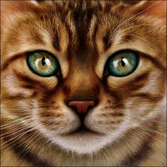 Warrior Cats Pictures