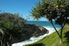 The North Gorge Walk on Pt Lookout is, quite simply, one of South East Queensland's most spectacular coastal walks. Brisbane Attractions, Point Lookout, Stradbroke Island, Queenslander, Holiday Destinations, The Locals, Walks, Stuff To Do, Coastal
