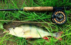 Brad Blackfish´s Angelwelt : Fliegenfischen auf Barsch