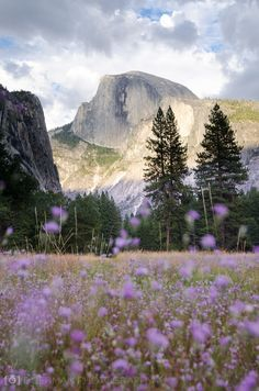 See Yosemite. The Top Yosemite Things To Do. If you go to Yosemite things to do are in abundance. However, there are a few things that should be at the top of your list. The top things you'll want to Landscape Photography, Nature Photography, Scenic Photography, Night Photography, Landscape Photos, Nationalparks Usa, California Camping, California Usa, Pacific Coast Highway