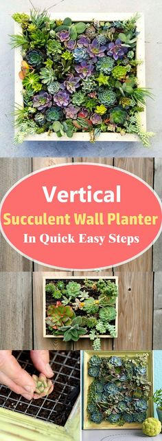 Learn how to make a vertical succulent wall planter in a few steps without spending money. You don't need to be a great DIYer to have this DIY succulent frame in your home. diy plants Vertical Succulent Wall Planter In Quick Easy Steps Succulent Wall Planter, Succulent Frame, Vertical Succulent Gardens, Hanging Succulents, Diy Planters, Succulents Garden, Succulent Ideas, Garden Planters, Planter Ideas