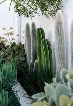 A refreshing approach brings a sculptural edge to this sustainable succulent garden in Sydney. Cacti And Succulents, Cactus Plants, Cactus Garden Ideas, Indoor Cactus Garden, Cacti Garden, Outdoor Plants, Outdoor Gardens, Different Types Of Succulents, Landscape Design