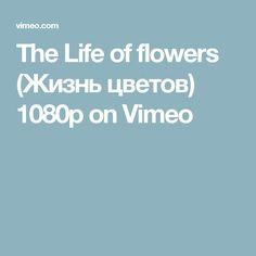 The Life of flowers (Жизнь цветов) 1080p on Vimeo