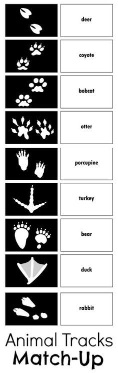 Relentlessly Fun, Deceptively Educational: Animal Tracks Match-Up Game Printable