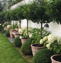 If you are looking for Small Garden Design Ideas, You come to the right place. Below are the Small Garden Design Ideas. This post about Small Garden Design Ideas. Backyard Garden Design, Diy Garden, Backyard Fences, Front Yard Landscaping, Fence Garden, Landscaping Design, Backyard Privacy, Boxwood Landscaping, Shade Garden