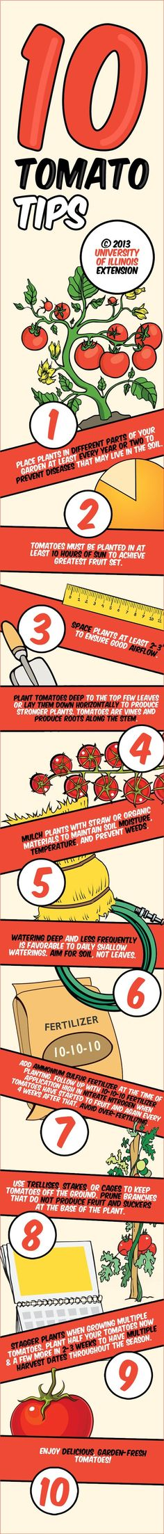 Top 10 Best Tomato Planting Tips: http://homeandgardenamerica.com/top-10-best-tomato-planting-tips