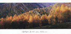 orange ~ paysage ~ arbres ~ montagne ~ quelque part sur terre