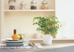 Living things boost energy in a space. Maidenhair ferns get high marks for their hardiness (read: they're hard to kill) and bring lushness to a bookshelf, console, or entry table.