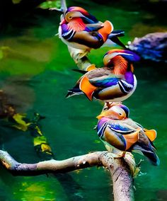 Rainbow colored ducks sitting on a branch over green colored water