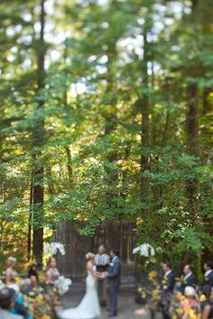 ceremony under redwood trees