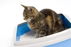 Good Homemade Cat Box Refresher