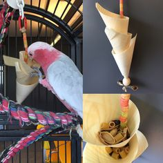 Foraging toy made of finger food components, filled with pasta, seeds and pistachio shells
