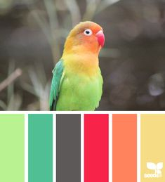 Juicy, tropical-inspired hues for a high Playfulness palette. | feathered hues via Design-Seeds | commentary via The Voice Bureau at AbbyKerr.com #VoiceValues