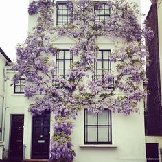House with Wisteria in Kensington More