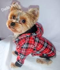 Resultado de imagem para roupas para cachorro macho