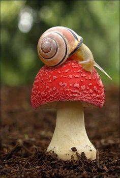 Snail with Fungi~~  https://sphotos-a.xx.fbcdn.net/hphotos-ash4/270860_475394042518156_229780126_n.jpg