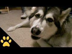 video- Animais que falam - (tudo por email)