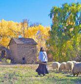 El Rancho de las Golondrinas is a living history museum located on 200 acres in a rural farming valley just south of Santa Fe, New Mexico.