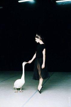 Marie Agnes Gillot; Swans