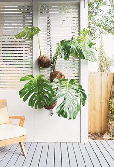 Hanging Kokedama - Creating Potless Plants for the Home