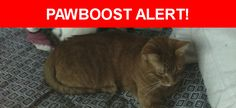 Please spread the word! Leo was last seen in Melrose Park, IL 60164.  Description: Leo is a neutered, 3 year old mail.  He is timid with strangers.  Nearest Address: 10707 Wrightwood Avenue, Melrose Park, IL, United States