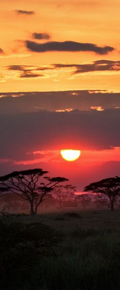 Africa has a safari for every single traveller - what is going to your holiday tale be? African safari gives and trips range between container-itemizing routines to really-higher-school Beautiful Sunset, Beautiful World, Beautiful Places, Amazing Sunsets, Amazing Nature, Amazing Things, Tanzania Safari, Out Of Africa, African Safari