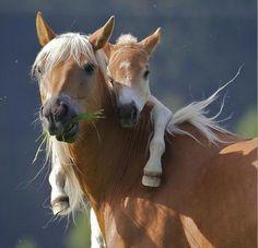 *mommies & babies*