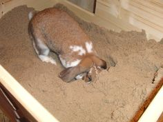 This would be a Good idea for the indoor buns to dig.