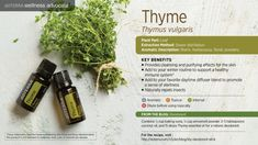 doTERRA thyme Essential Oil Uses