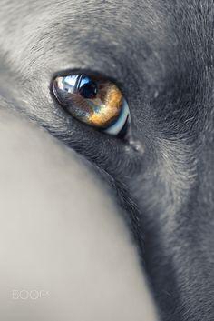 Iggy Eye by Alessandro Manco on 500px