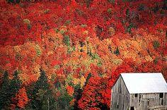 Bristol, New Brunswick - The fall colours are something I am sooooo looking forward to!!!!!