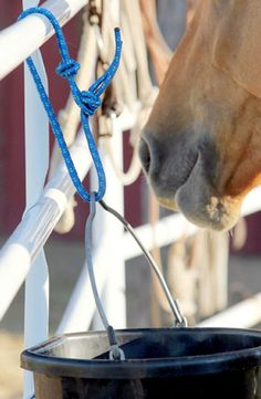 Use these bucket hangers all around your barn | ChickSaddlery.com
