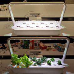 Click and Grow Smart Garden 9 Indoor Home Garden (Includes 3 Mini Tomato, 3 Basil and 3 Green Lettuce Plant pods), White Smart Garden, Home And Garden, Green Lettuce, Basil, Outdoor Gardens, Indoor, Gardening, Plants, Home Decor
