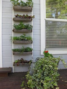 Reuse a rack. Got an old utility or shoe rack lying around? Line the shelves with moss and plant herbs and vegetables to your heart's content! Either lean the rack against an outside wall, or mount it. Watering tip: Moss drains very quickly, and many gardeners can get frustrated trying to keep their plants properly hydrated. To avoid this, add a layer of plastic with drainage holes below the moss.