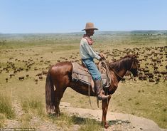Historians define the period as one of rapid expansion during the 19th and 20th century. 'There is an artistic aspect to colorisation, but I always try to put historical accuracy and realism first,' said Jared. Pictured, a day herder, Bert Killion, on a knoll overlooking the grazing herd at LS Ranch, Texas, in 1907