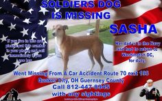 REUNITED WITH FAMILY  Lostdog 1-4-15 #Cambridge #OH #Greyhound mix 8y F 812-447-8945 SUE SCHULLERY LOST & FOUND OHIO PETS https://www.facebook.com/LostFoundOhioPets/posts/588645144570188