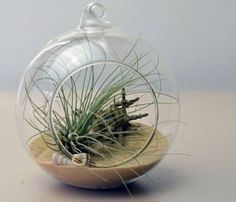Beach Terrarium - Tillandsias, aka air plants are amazing plants. They don't need soil to grow, they are very hardy, and require much less attention than other house plants. Airplants receive moisture and nutrients through their leaves, leaving you with no soil, no mess, and no sad collection of dead plants. Perfect hanging, sitting, in a group, or solo. Shipped as a kit, which is very easy to assemble. You just place all items in the glass container.
