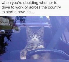 When you're deciding whether to drive to work or across the country to start a new life...