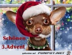 Funny Christmas Chihuahua Dog with Santa Hat, My Jake! Chihuahua Love, Chihuahua Puppies, Chihuahuas, Christmas Animals, Christmas Humor, Christmas Cards, Merry Christmas, Funny Christmas, Christmas Pets