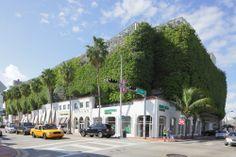 La vegetación llena de alegría y frescura las calles de #Miami, ciudad de #Florida que siempre invita a disfrutar sus inigualables encantos naturales y culturales durante todo el año. http://www.bestday.com.mx/Los-Angeles-area-California/