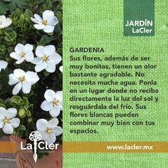 Bonita para la vista y el olfato, ¿qué opinas?   Fotografía de: http://huntersgardencentre.com/   #jardín #hogar #plantas #flores #homedecor