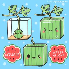 Watermelons are such a huge hit every summer! (๑╹ڡ╹๑) But have you ever tried a square/cube-shaped one? Of course, they taste like normal, round, juicy, sweet watermelons~ The only difference is that you can easily stack them up or store them in the fridge.. And that they cost a whopping 10,000 Yen (around $100) each. (」゚ロ゚)」