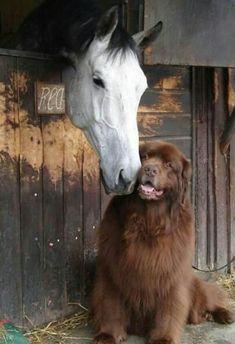 Everyone needs a friend...